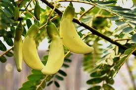 75 सब्जियों के इंग्लिश और हिन्दी नाम Indian Vegetables Names With Pictures Step 11