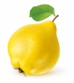 टॉप 101 फलो के नाम इंग्लिश और हिन्दी में Fruits Name In Hindi and English With Picture Step 119