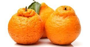 टॉप 101 फलो के नाम  इंग्लिश और हिन्दी में Fruits Name In Hindi and English With Picture  Step 151